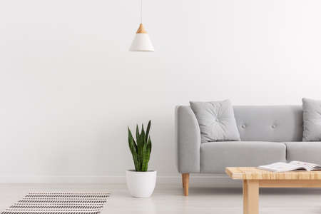 White lamp above green plant in pot next to grey sofa with pillows in elegant daily room interior, real photo with copy space Stok Fotoğraf