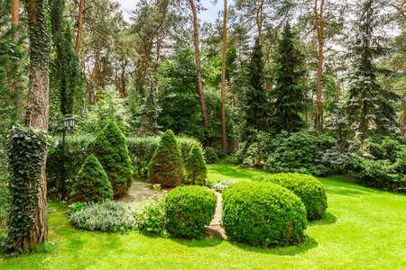 Zielona trawa, krzewy i drzewa w ogrodzie w słoneczny dzień