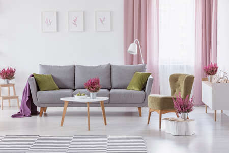 Sofá gris con cojines verdes y manta morada en foto real del interior de la sala de estar blanca con mesa de café con frutas y brezos, carteles en la pared y ventana con cortinas rosas blancas y sucias Foto de archivo