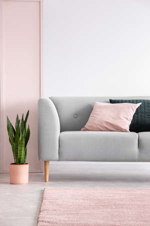 Plant next to grey settee with cushions in grey living room interior with pink carpet. Real photo