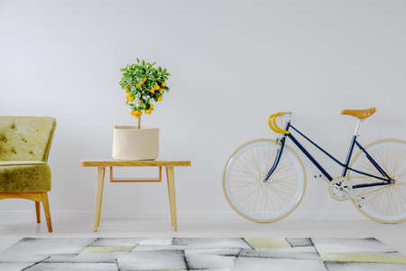Vintage blue bicycle, coffee table with mandarin plant in wicker pot and olive green armchair in classy living room interior with white wall Stock Photo