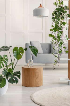 Plantas y mesa de madera en el interior de una sala de estar blanca