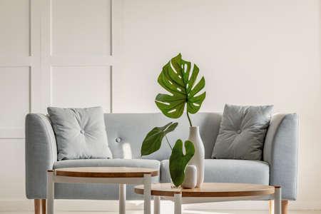 Monstera deliciosa en la mesa de café y un sofá gris en el interior de una sencilla sala de estar