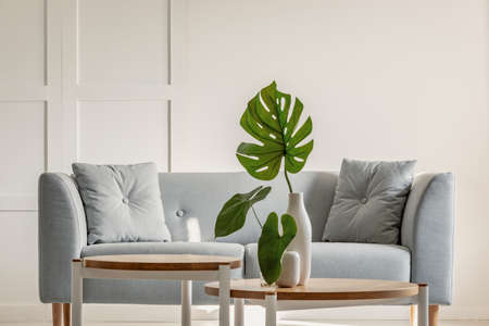 Monstera deliciosa on coffee table and grey sofa in a simple living room interior 免版税图像