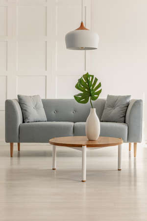Real photo of a grey sofa and coffee table with a monstera deliciosa in a living room interior Foto de archivo