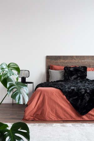 Coral sheets and black furry blanket on wooden bed in white room with monstera plant Stock Photo