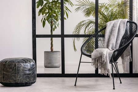 Grey cozy blanket on black fancy armchair in spacious living room interior with urban jungle