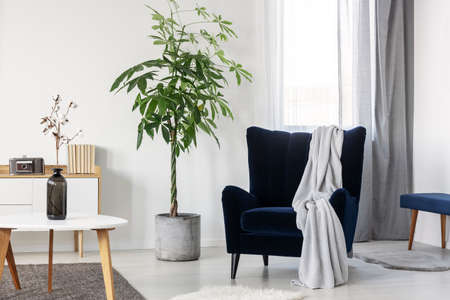 Grey blanket on navy blue armchair in bright living room interior Stok Fotoğraf
