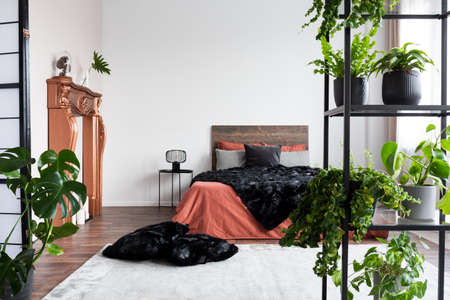 Copy space on empty white wall of rustic bedroom interior with king size bed with orange bedding and black duvet