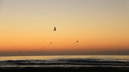 toilet: Birds flying during the sunrise on the beach Stock Photo