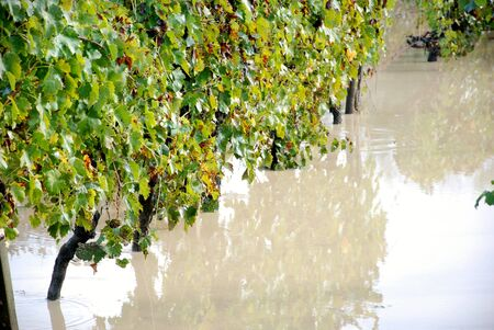 flooded: flood, flooded fields and vineyards