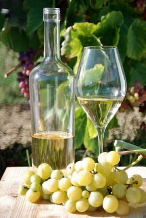 whitw: bottle and glass with white wine, vineyards background