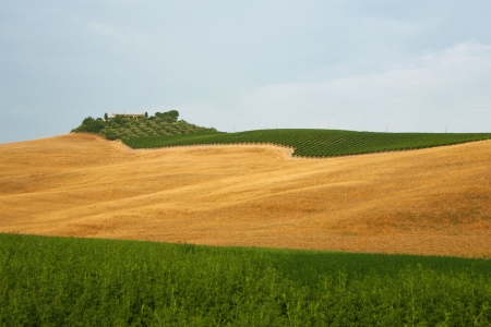 View of a vineyard in Tuscan, Italy photo
