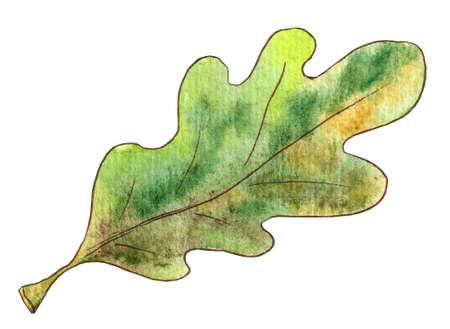 Watercolor illustration green oak leaf on white background Stok Fotoğraf