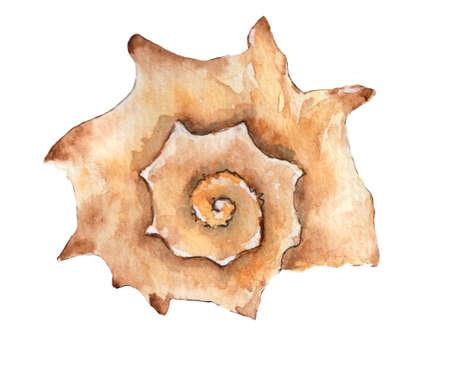 Hand paint watercolor seashell isolated on white background.Nautilus raster illustration