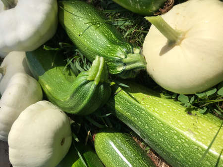 Green zucchini; Elongated green vegetable; Fresh picked green courgette offered at farmers market; Summer squash
