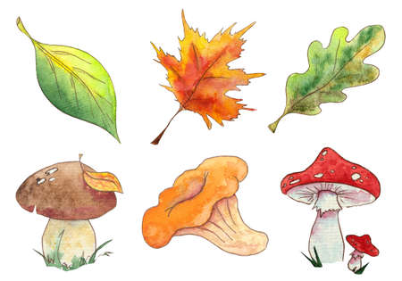 Hand drawn watercolor autumn set of leaves and mushroom l isolated on white background. Elements of the autumn set for you design.