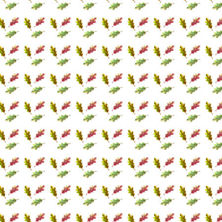 Seamless pattern watercolor oak leaf on white background.