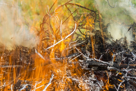 Bush on fire outdoor. Burning dry grass. Fire and smoke. background conceptual Dangerous fires and smokes Stock Photo - 126904275