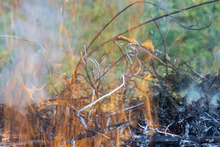 Bush on fire outdoor. Burning dry grass. Fire and smoke. background conceptual Dangerous fires and smokes Stock Photo - 126904287