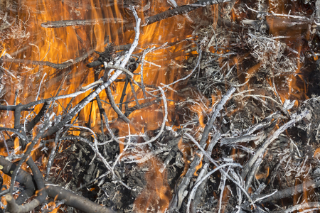 Bush on fire outdoor. Burning dry grass. Fire and smoke. background conceptual Dangerous fires and smokes Stock Photo - 126904289