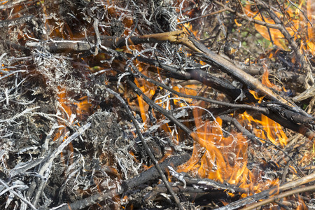 Bush on fire outdoor. Burning dry grass. Fire and smoke. background conceptual Dangerous fires and smokes Stock Photo - 126904291