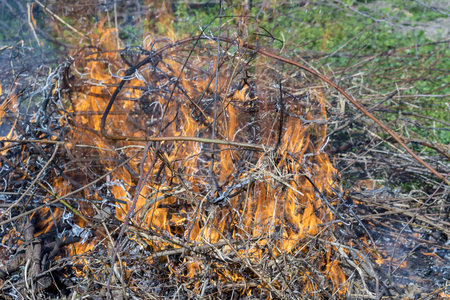 Bush on fire outdoor. Burning dry grass. Fire and smoke. background conceptual Dangerous fires and smokes Stock Photo - 126904333