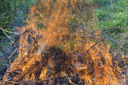 Bush on fire outdoor. Burning dry grass. Fire and smoke. background conceptual Dangerous fires and smokes Stock Photo - 126904337