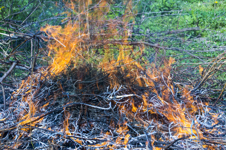 Bush on fire outdoor. Burning dry grass. Fire and smoke. background conceptual Dangerous fires and smokes 免版税图像 - 126904472