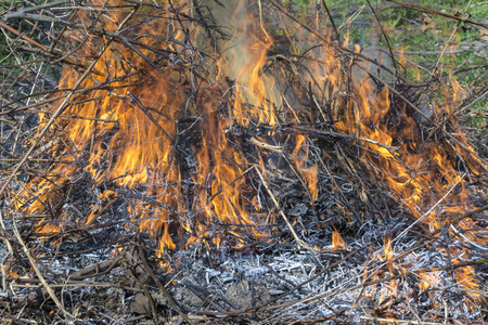 Bush on fire outdoor. Burning dry grass. Fire and smoke. background conceptual Dangerous fires and smokes Stock Photo - 126904475