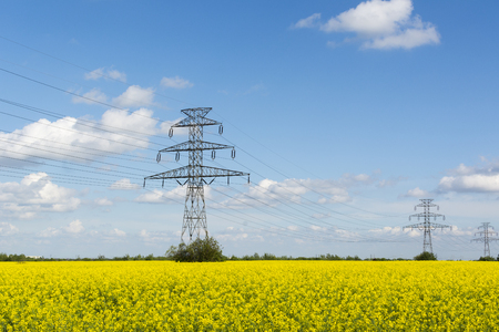 Golden flowering field of rapeseed, electric poles of high-voltage lines