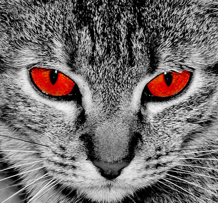 Cat with red eyes. Angry eyes. Cat look at camera