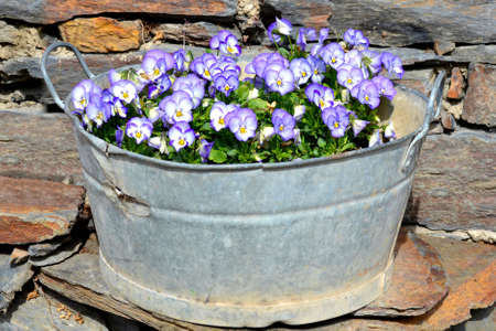 Pansies in vintage brass planter Stock Photo