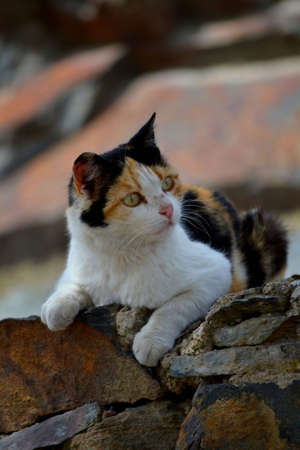 Mixed breed cat resting on stacked stone wall