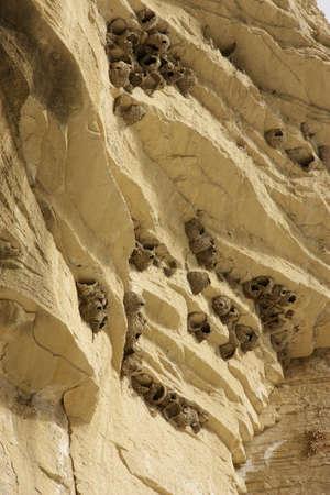 strata: Scogliere a strati strati con fango costruita ingoia nidi Archivio Fotografico