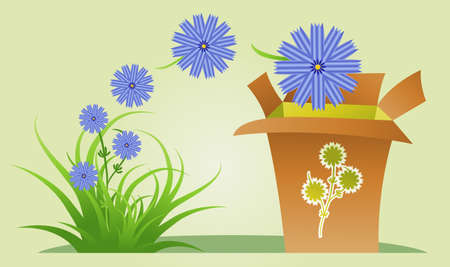 Semi-abstract illustration of collecting chicory flowers for medical purposes