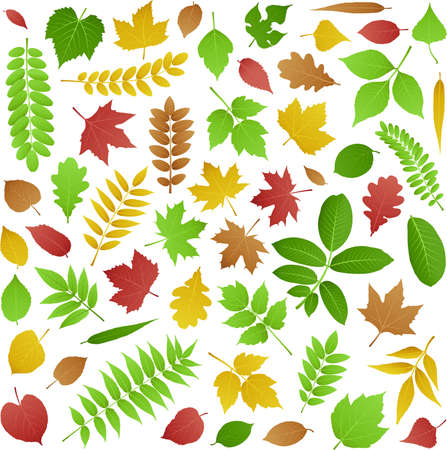 Collection of green and autumn leaves