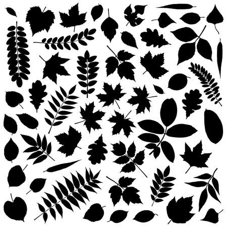 acacia tree: Big collection of different leaves silhouettes