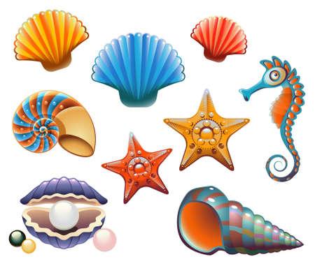 caracolas de mar: Colección de conchas y estrellas