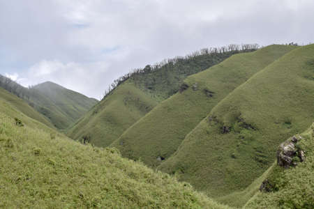 Spectacular hills covered in tall grasses near Dzukou Valley, Nagaland