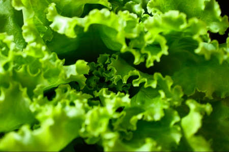 Macro photo of the green salad,top view. Texture background from the fresh lettuce green salad. Close up photography.Healthy food concept. 版權商用圖片 - 148098563