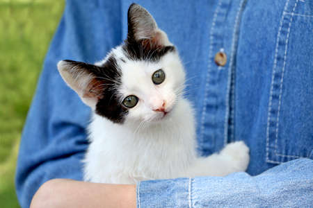 Not a purebred kitten lies in the hands of its owner.Young girl in a denim t-shirt holding her cat,outdoor. 版權商用圖片 - 148267955