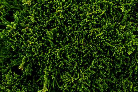 Closeup photography of green plant.Growth background. 版權商用圖片 - 151872015