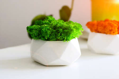 Bright green and orange stabilized moss at the reception desk.Office decoration.Modern interior.