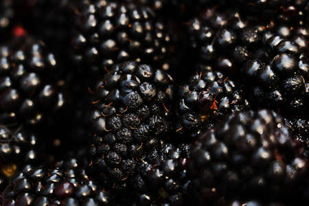 Close up photography of wet blackberries.Macro shot.Abstract background,copy space. 版權商用圖片