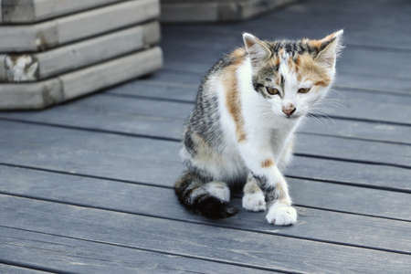 Not a purebred kitten on the terrace of the cafe, goes forward on the wooden floor.Summer rest outside. 版權商用圖片
