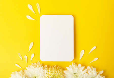 Blank isolated white card on the bold yellow background with beautiful chrysanthemums on the background.Mockup for design.Horizontal photography with copy space.
