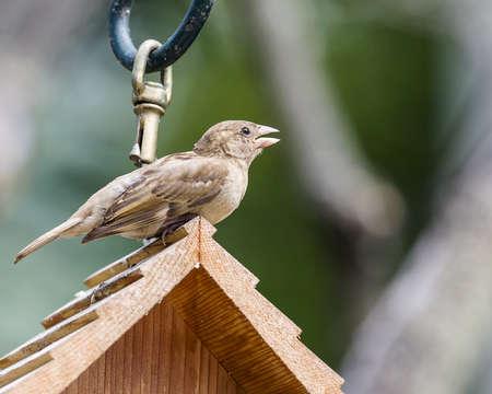 Sparrow Stock fotó - 21929214