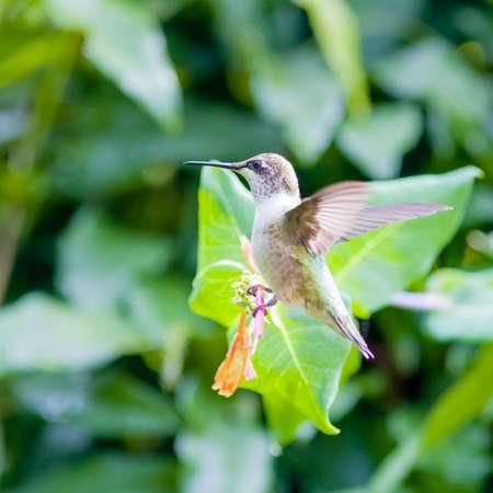 Hummingbird perched on vine