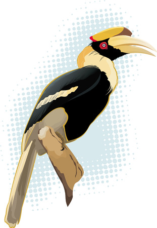 bough: Hornbill Illustration